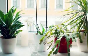 Fensterbank_pflanzen
